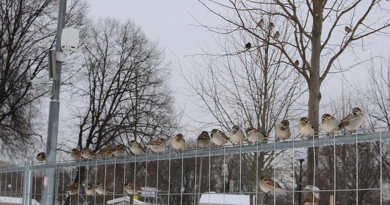 птицы 1.jpg