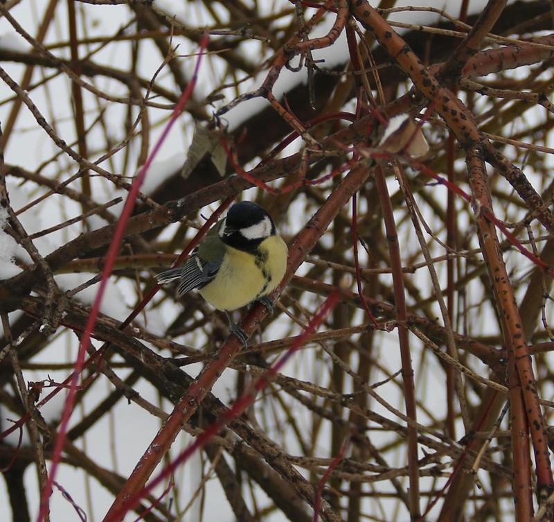 птицы 4.jpg