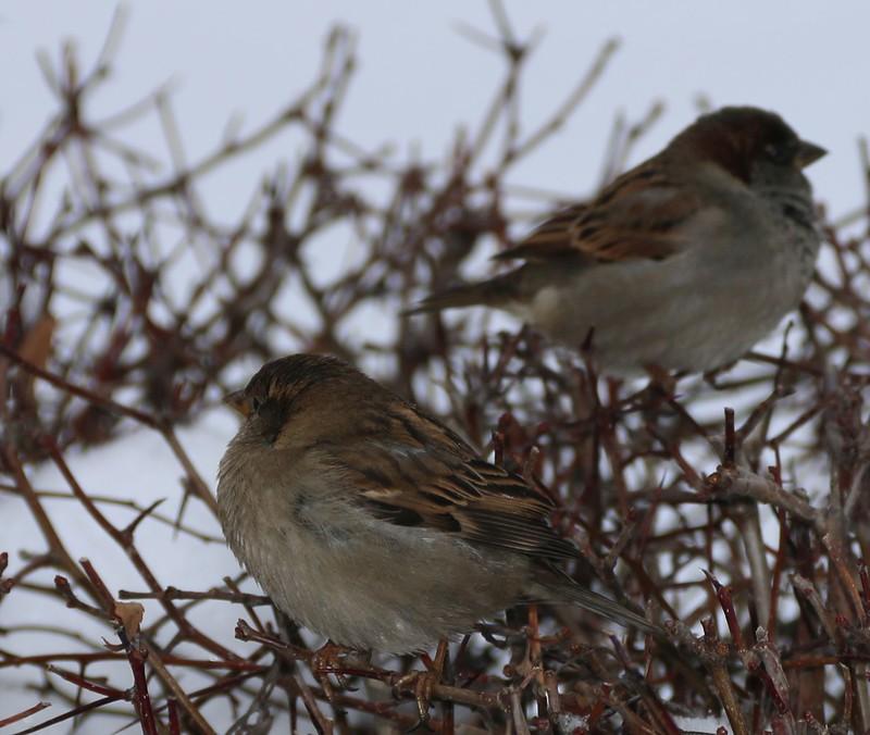 птицы 18.jpg