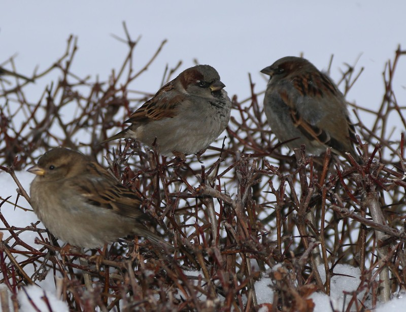 птицы 19.jpg