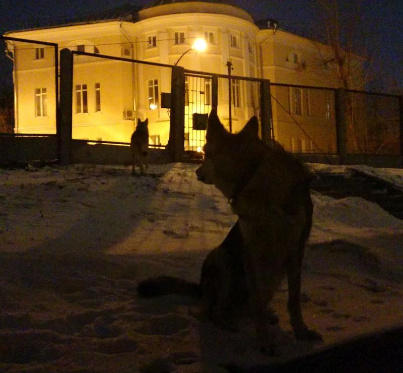 Ночные волки 1.jpg