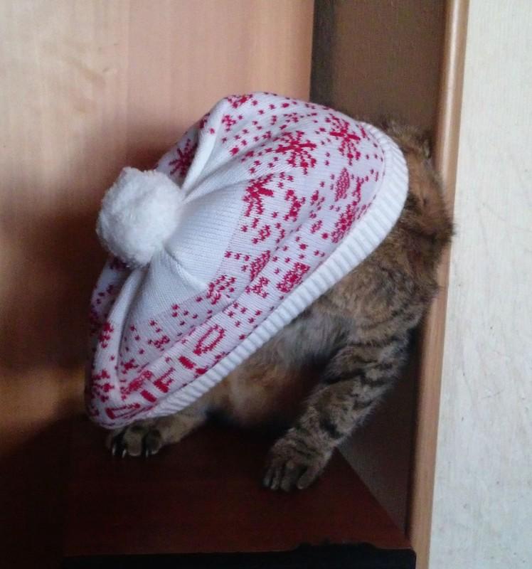 ДЖойка в шапке 1.jpg