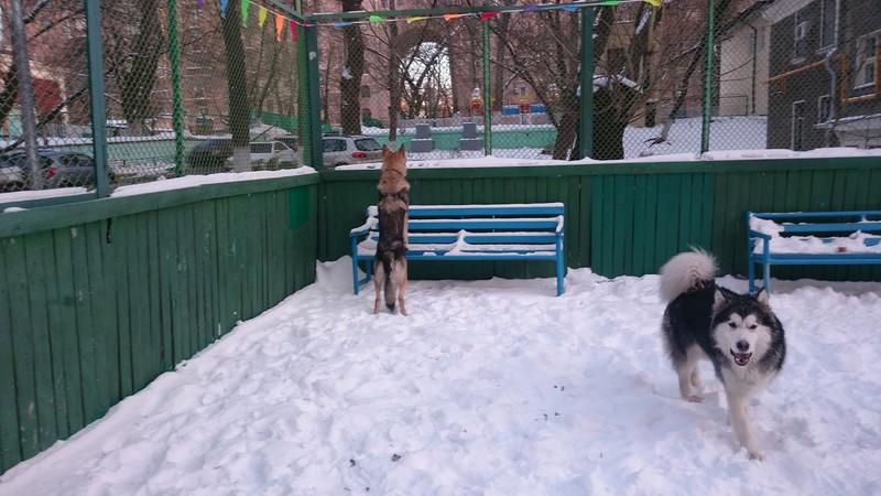 Карма Канис 29 декабря 2014 24.jpg