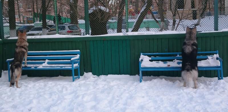 Карма Канис 29 декабря 2014 39.jpg