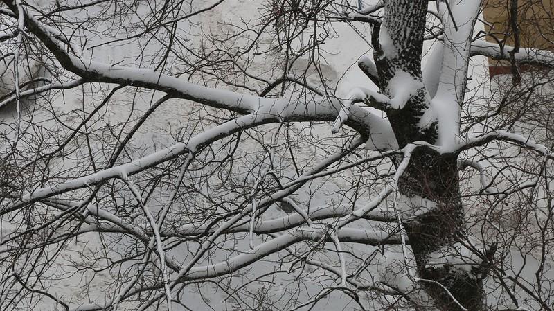 деревья в снегу.jpg