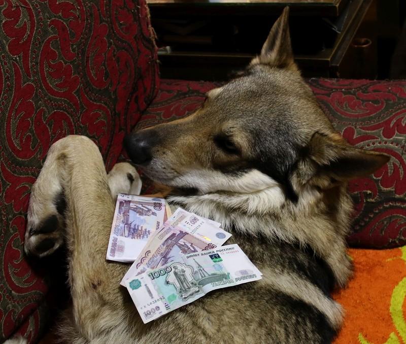 Канис с деньгами 1.jpg