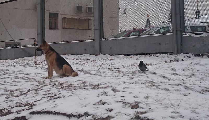 Найда с Ворькой декабрьт 2014 1.jpg