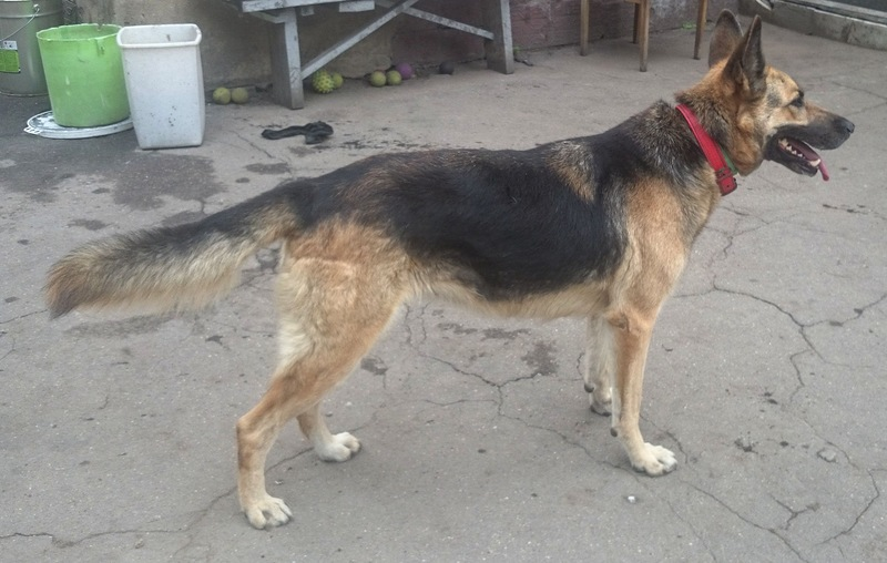 Канис Найда охрана 21 августа 2014 10.jpg