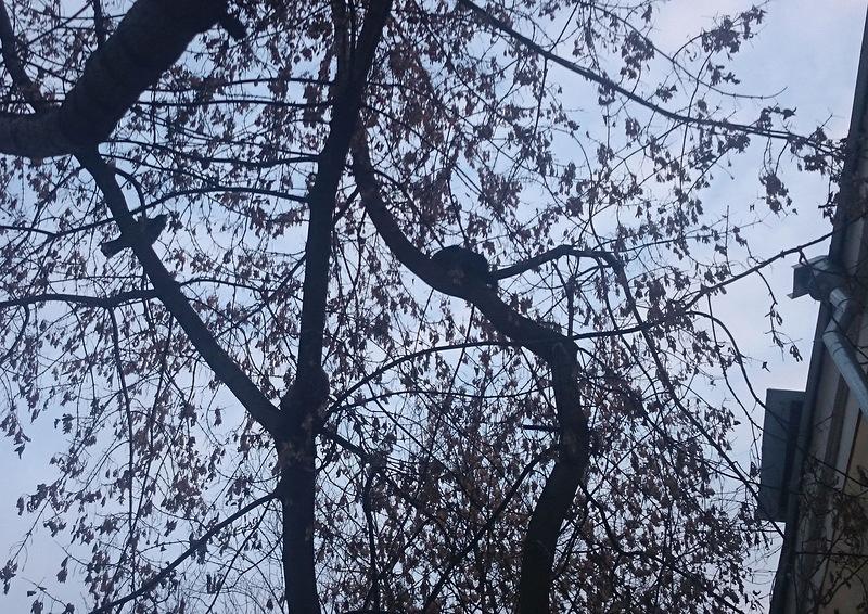 два кота на дереве 1.jpg