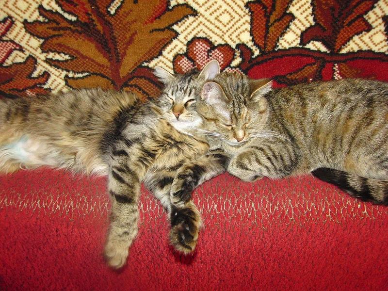 Джойка и Ульси 25 марта 2012 2.jpg