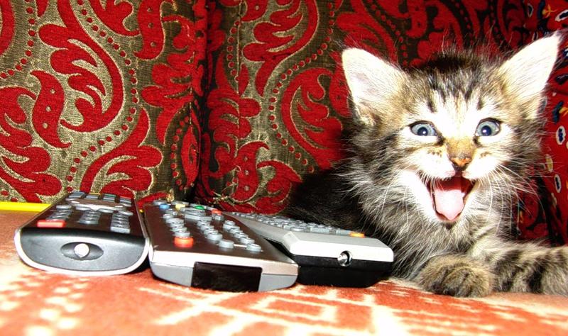 Ульси 15 июля 2011 8 Уря-я! Фильма.jpg