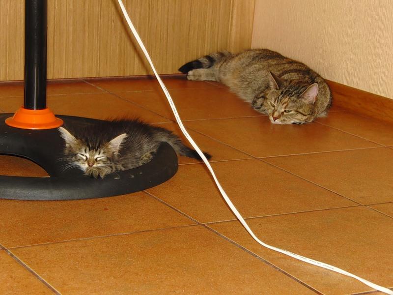 Джойка и Ульси 20 июля 2011 1.jpg
