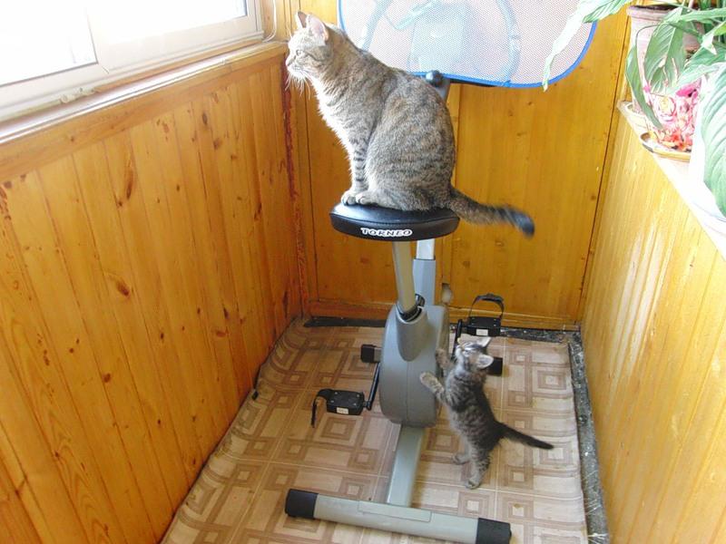 ДЖойка и Ульси 05 августа 2011 1.jpg