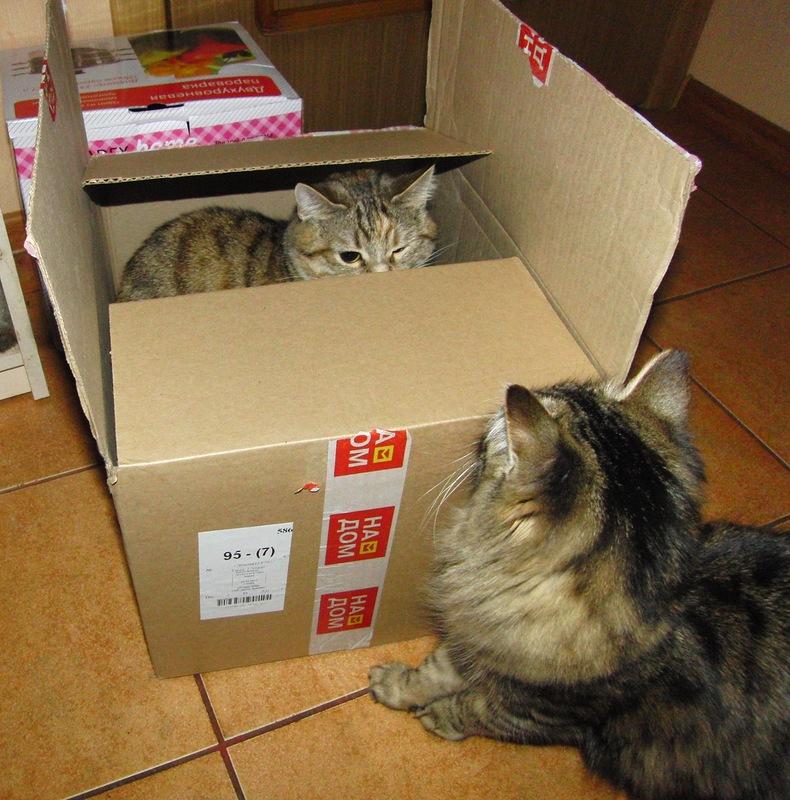 Джойка и Ульси в коробке 3.jpg