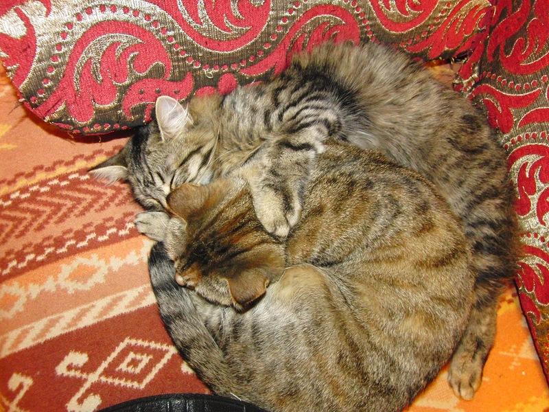 Джоя с Ульси январь 2012 2.jpg