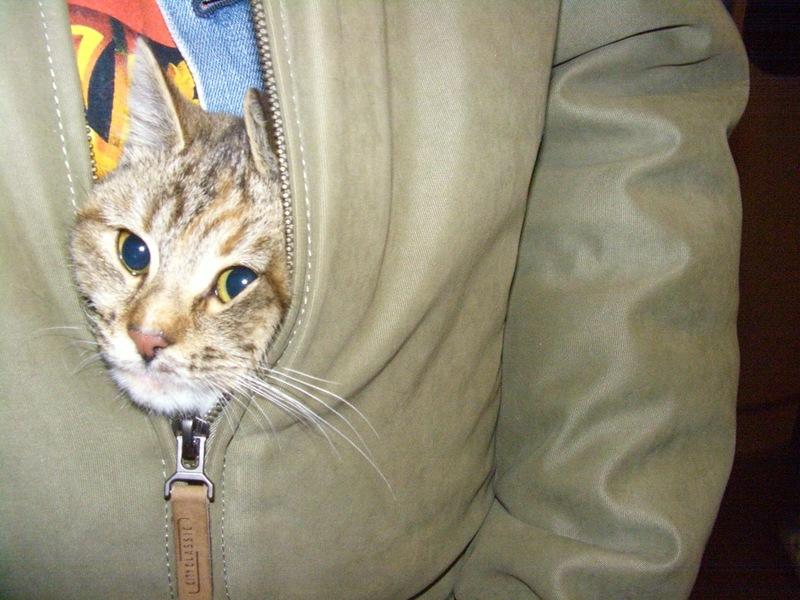 кошка 15 ноября 2009 12.jpg
