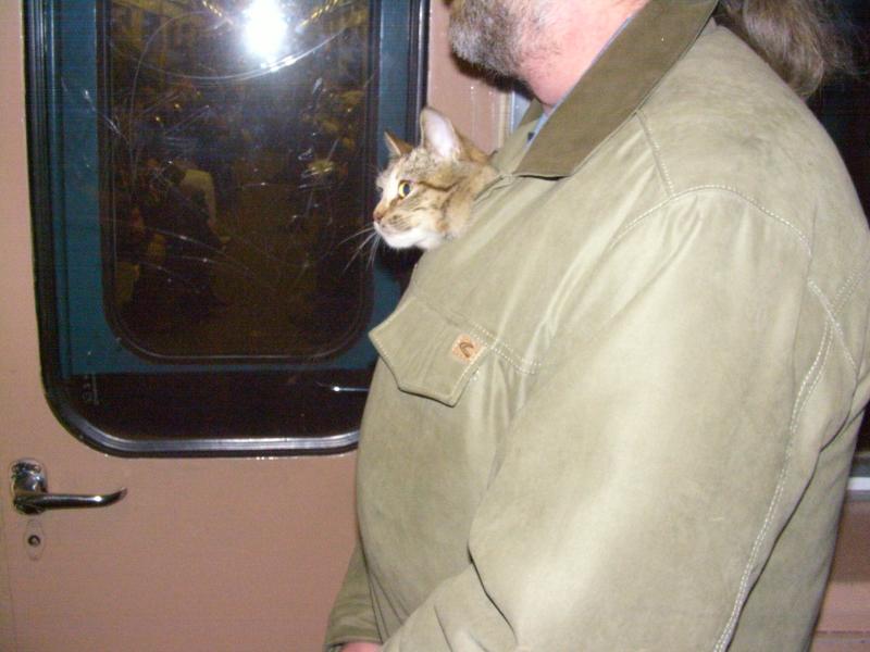 кошка 15 ноября 2009 15.jpg