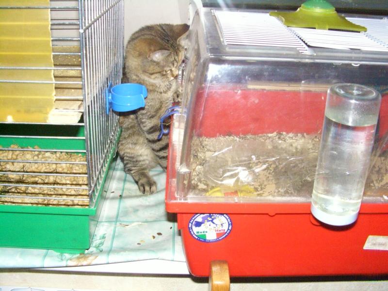 кошка 15 ноября 2009 19.jpg