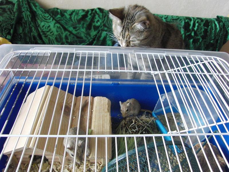 Джойки и песчанки 7 июля 2010 4.JPG