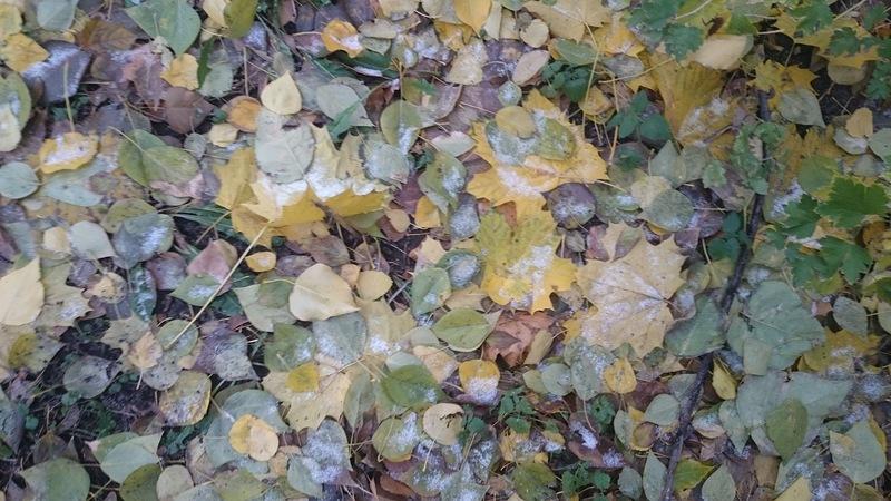 листья в снегу.jpg