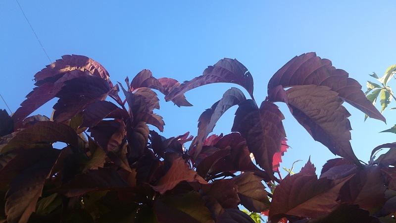осень 2.jpg