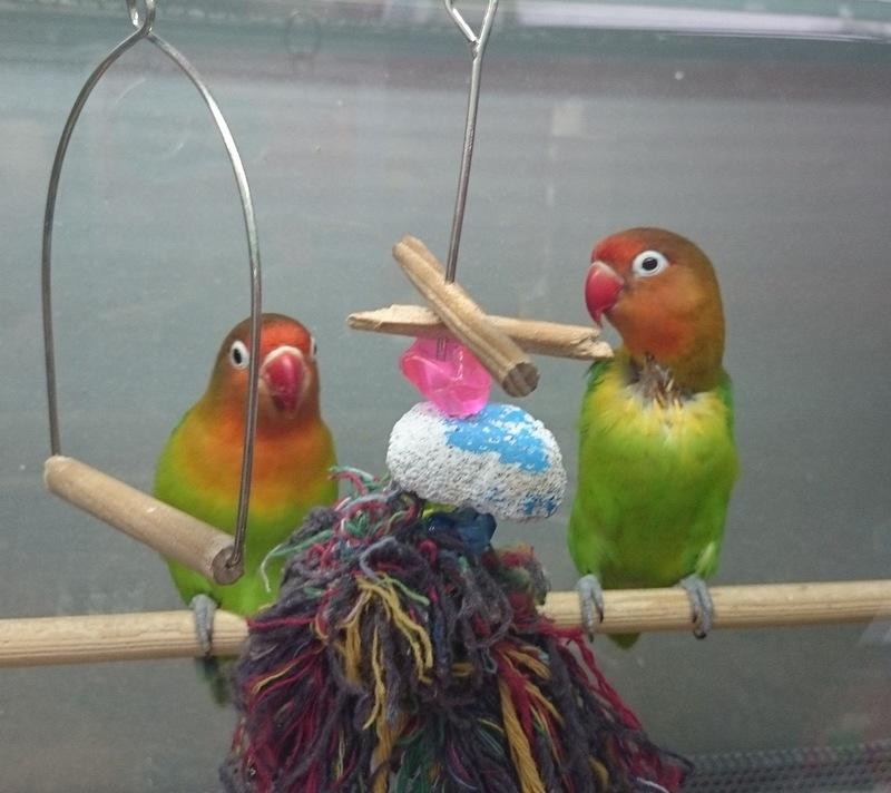 попугаи 12jpg.jpg