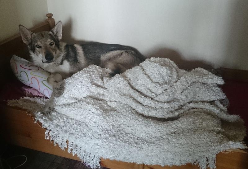 Канис в кровати.jpg