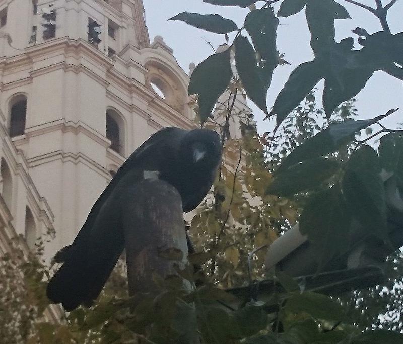 Ворька 19 сентября 2014 2.jpg
