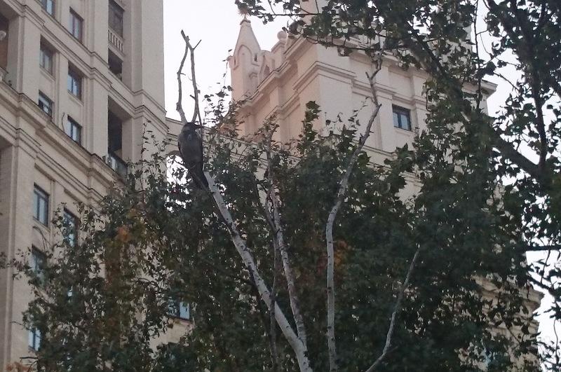 Ворька 19 сентября 2014 4.jpg