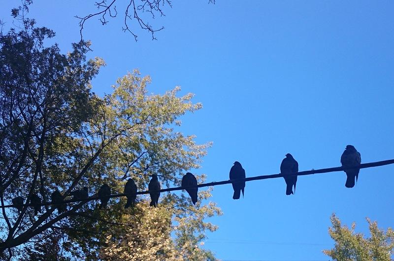 голуби на фоне неба.jpg