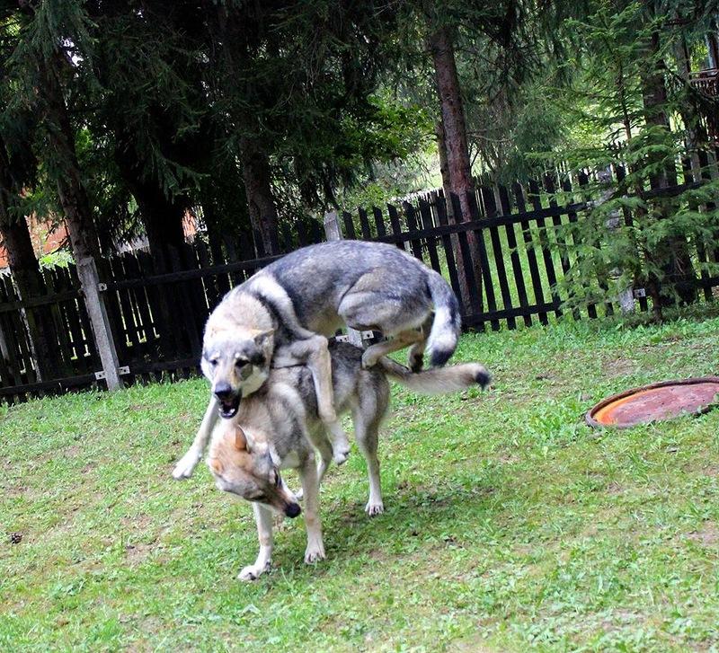 Влчаки из фейсбука.jpg