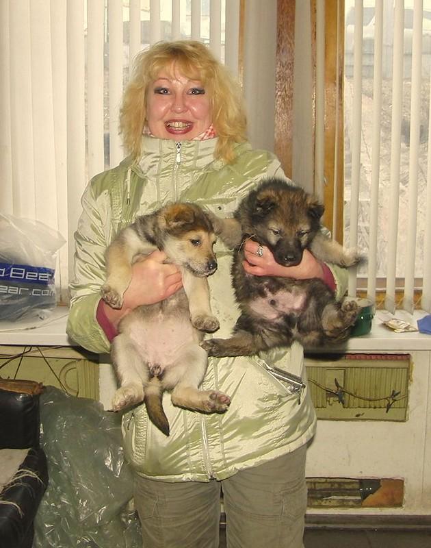 Ольга с щенками Найды  27 февраля 2014 1.jpg