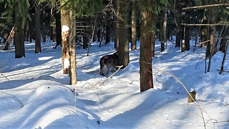 Канис 8 марта в лесу 2018112.jpg