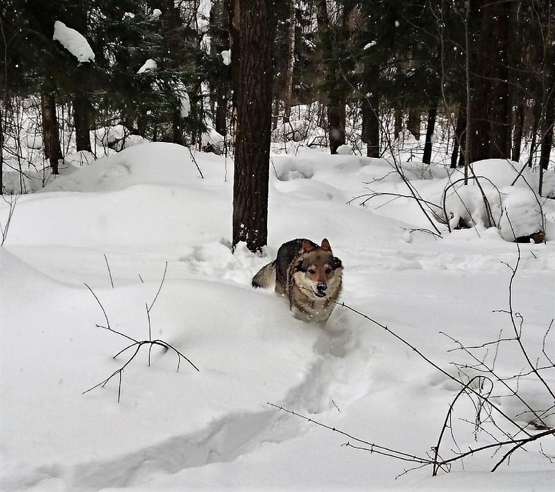 Канис 8 марта в лесу 2018123.jpg