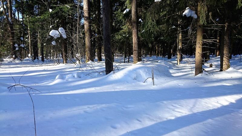 Петелтно зимний лес 3.jpg