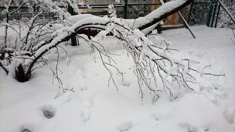 Снегопад в Москве февраль 6.jpg
