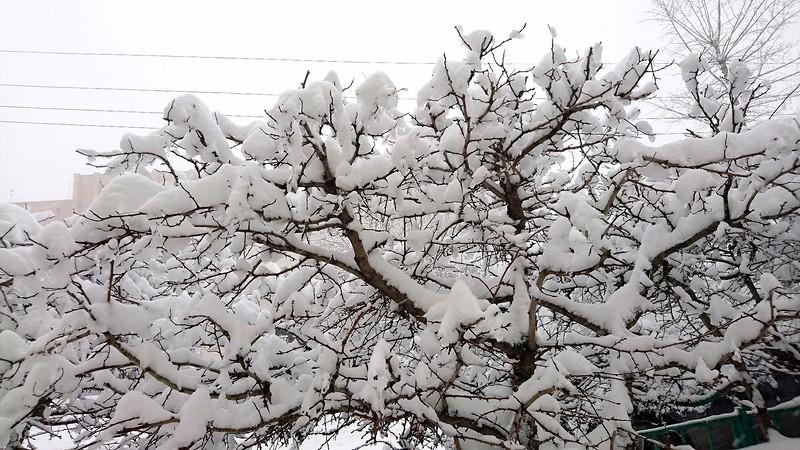 Снегопад в Москве февраль 9.jpg