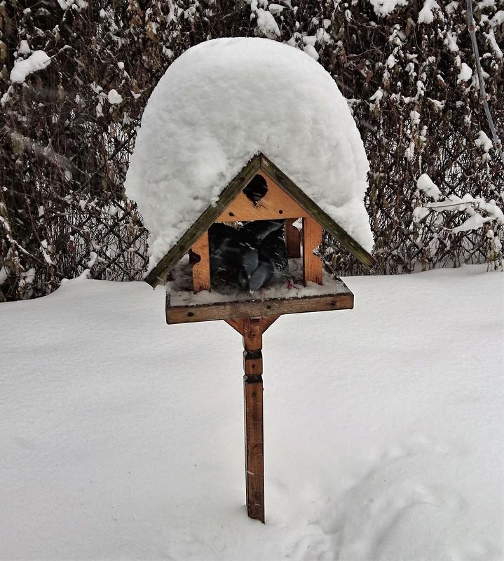 Снегопад в Москве февраль 11.jpg