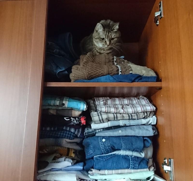 Джойка в шкафу 17 января 2018 1.jpg