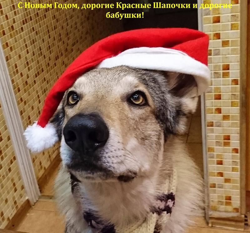 С Новым годом Красные шапочки.jpg