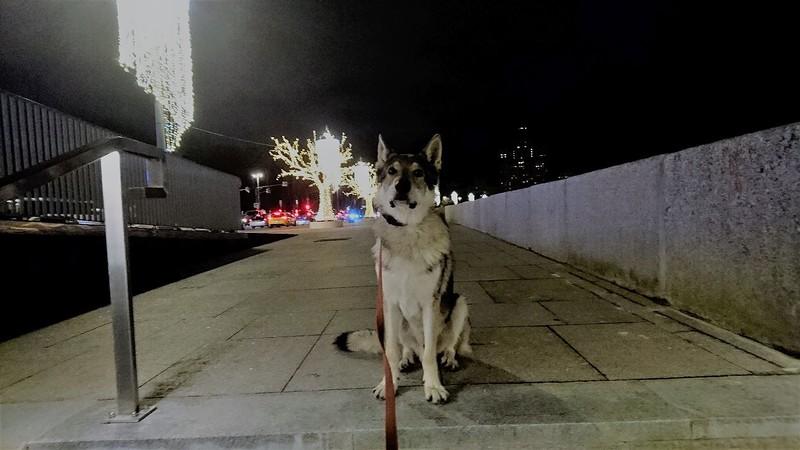 Канис на набережной около Кремля 5.jpg