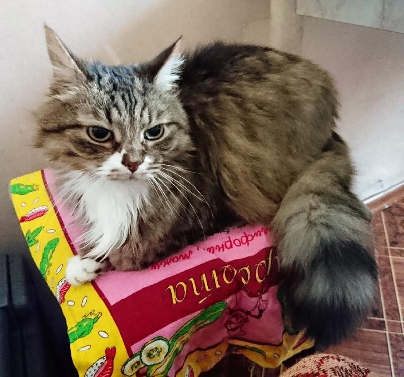 Галин кот 1.jpg