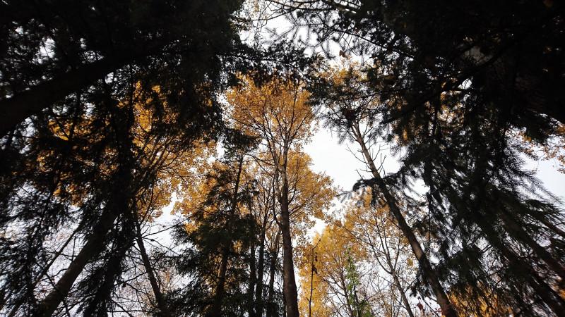 Осень в лесу 1.JPG