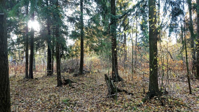 Осень в лесу 3.JPG