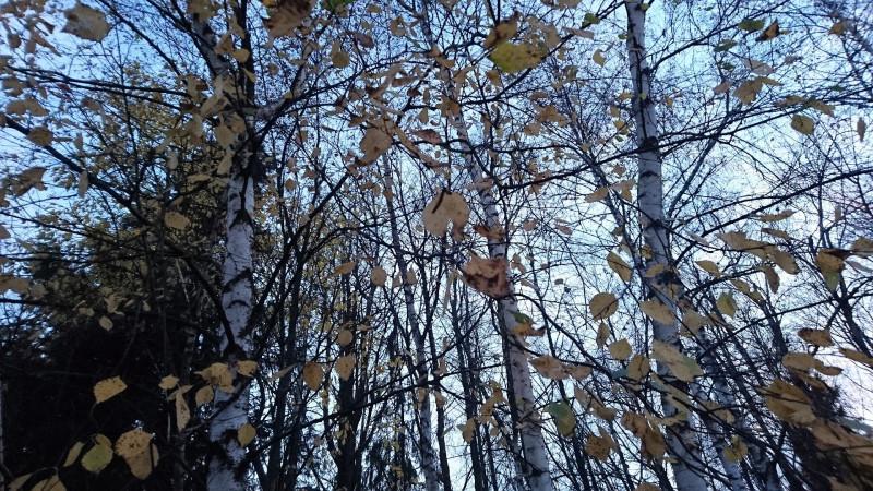Природа 4.jpg