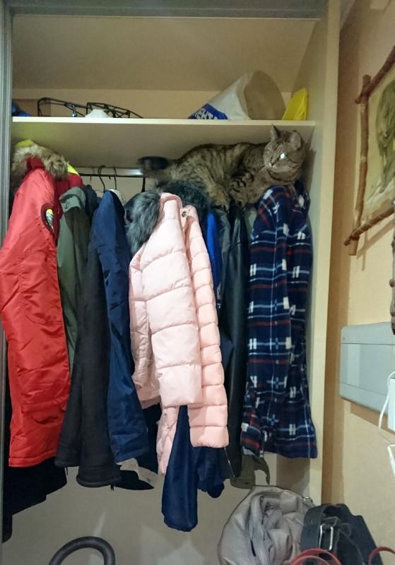 ДЖойка в шкафу Ноябрь 2018 2.jpg