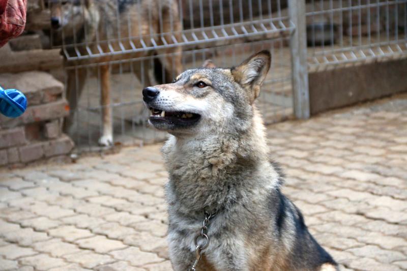 волк Февраль 9.jpg