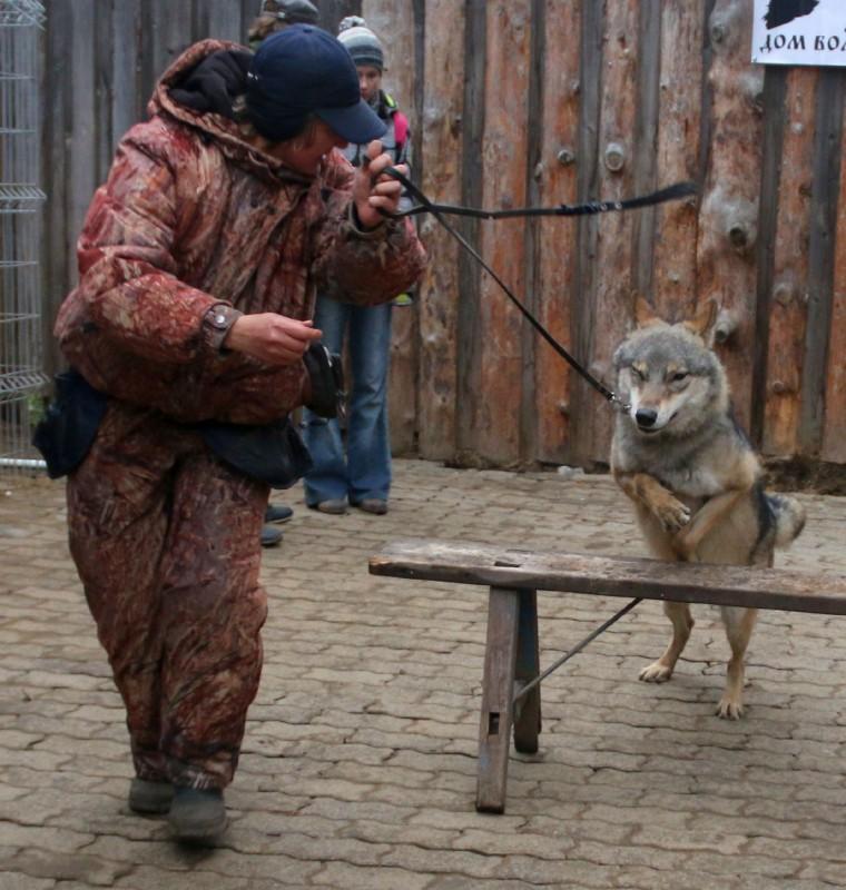 волк Февраль 19.jpg