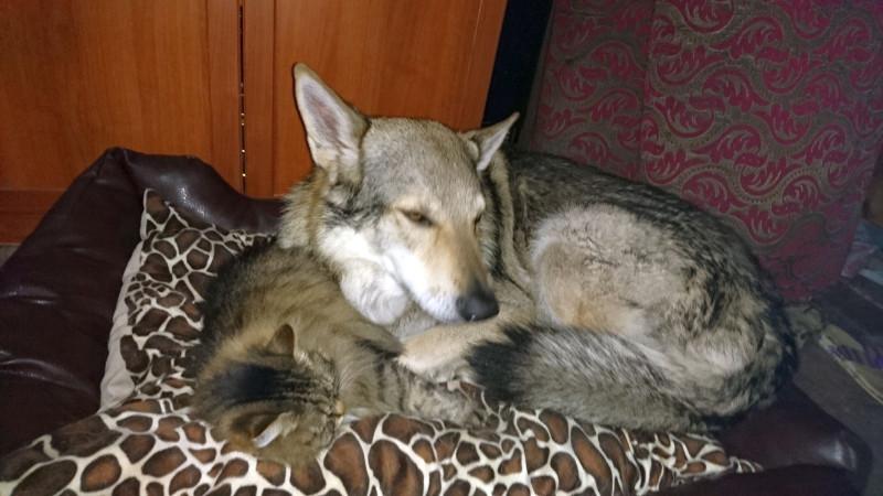 Канис и Ульси спят 4.jpg