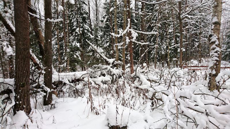 Лес 1 января 2019 1.JPG